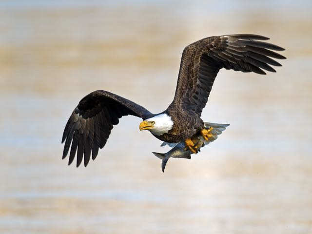 "Third place - ""Catch of the Day"" by Brian Kushner, Audubon, NJ"